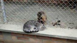 Смотреть Обезьяна ухаживает за кошкой