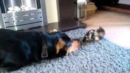 Смотреть Малыш-котёнок и игривый пёс