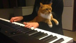 Смотреть Кот на коленях пианистки