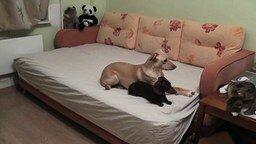 Смотреть Собаки в ожидании тебя