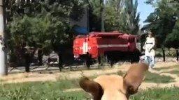 Собака воет на сирену смотреть видео прикол - 0:15