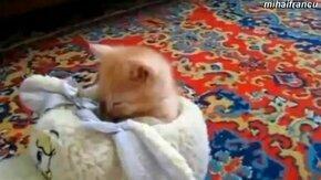 Смотреть Котята засыпают