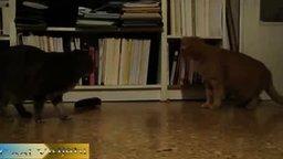 Смотреть Кошки против метронома