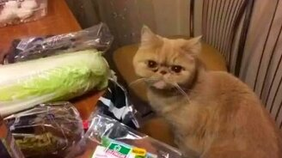 Кот-вегетарианец смотреть видео прикол - 1:28