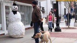 Смотреть Снеговик пугает собак с их хозяевами