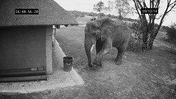 Слон-дворник смотреть видео прикол - 1:06