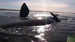 Смотреть Волнительная встреча каякеров с китами