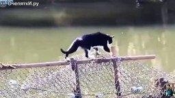 Кот пошёл сети проверять