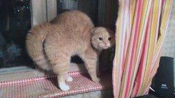 Смотреть Надела шапку - у кота инфаркт