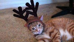 Смотреть Как кошки видят новогодние праздники