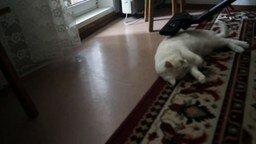 Смотреть Кошачий балдёж от пылесоса