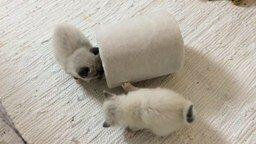 Смотреть Много маленьких светлых котят