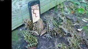 Смотреть Слёт любителей червей