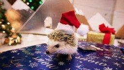 Рождественский ёжик