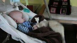 Смотреть Хорёк отнимает игрушку у малыша