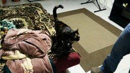 Смотреть Моя дрессированная кошка