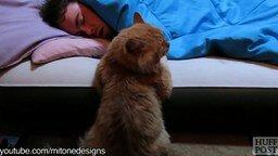 Смотреть Кошки-будильники