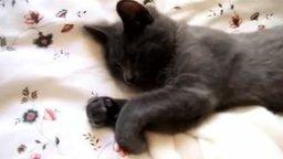 Смотреть Кот объясняет, что хочет ещё поспать