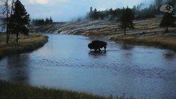 Смотреть Как волки меняют реки