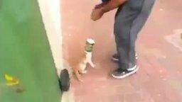 Смотреть Спас котёнка от смерти