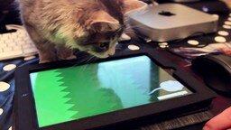 Смотреть Современная кошачья охота