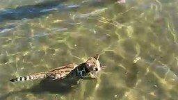 Кот - любитель поплавать смотреть видео прикол - 1:30