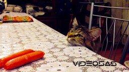 Стол, мейнкун и две сосиски смотреть видео прикол - 0:59