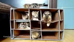 Многоэтажный домик для котят смотреть видео прикол - 1:14