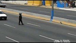 Смотреть Полицейский спас собаку на магистрали
