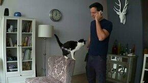 Ласковый кот-хвостик смотреть видео прикол - 1:50