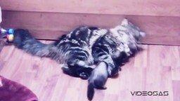 Смотреть Хорёк против котейки