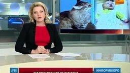 Смотреть Кошка спасла младенца