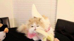 Смотреть Нарядная кошка ест банан