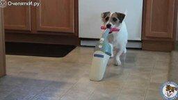 Смотреть Трюки очень полезной собаки