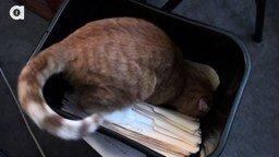 Смотреть Каково работать с кошками