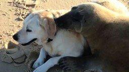 Смотреть Тюлень подружился с собакой