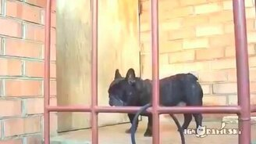 Смотреть Собака-возмущака