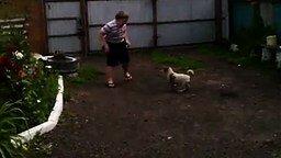 Истеричный мальчик против щенка смотреть видео прикол - 0:18
