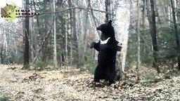Медведь-почесун смотреть видео прикол - 1:19