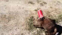 Собака спасает кошку смотреть видео прикол - 0:20