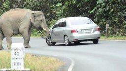 Слон атакует автомобиль смотреть видео прикол - 1:17