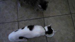 Смотреть Кошак, это мой стакан!