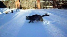 Первая и последняя зимняя прогулка кота смотреть видео прикол - 0:27
