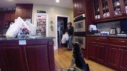 Смотреть Сын пугает маму собакой