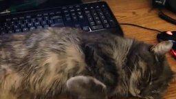 Кот, которому не сидится смотреть видео прикол - 3:35