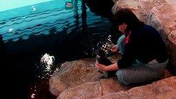 Смотреть Учат плавать пингвинёнка