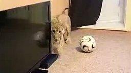 Смотреть Девушка завела настоящего льва