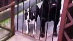 Смотреть Собака передразнивает хозяина