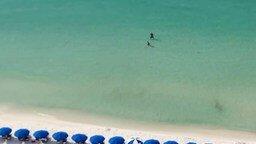 Смотреть Охота акулы на пляже
