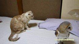 Смотреть Нарезка кошачьих приколов